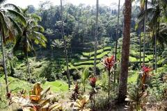 Bali3368 (17)