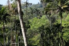 Bali3368 (20)