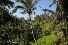 Bali3368 (21)