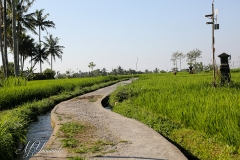 Bali3368 (23)