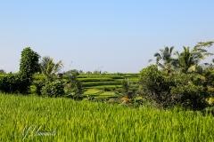 Bali3368 (24)